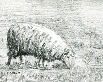 Original Pencil Sketch of a Grazing Sheep - 4 x 6 Art for Sale