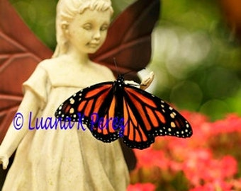 Angel Fairy and Butterfly Photo
