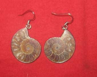 Beautiful Ancient Vintage Antique Moroccan Ammonite Fossil Earrings