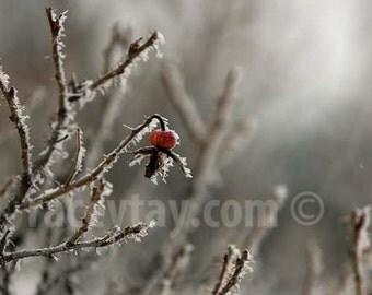Silver Wall Art, Winter Art, Nature Photography, Red, Gray, Neutral Decor, Frost, Winter Flower Photograph