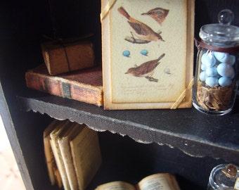 Miniature Vintage Botanical Bird Print Mounted for Dollhouse 1/12 Scale