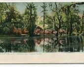 Lake View Magnolia Gardens Charleston South Carolina Tuck postcard