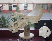 Triceratops Skull Sculpture hand built by NW artist Michael Gonzales