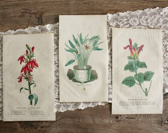 3 Antique 19th c. Hand Colored Floral Botanical Prints