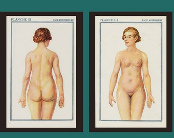 Original vintage SET of TWO 1940s Antique ANATOMY prints, lithograph of a anatomy chart in the Human Body