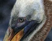 Dexter - brown pelican pastel pencil drawing print