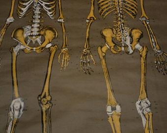 Huge Vintage Anatomy Chart - The Skeletal System