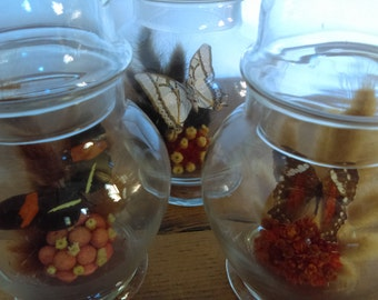 Vintage Butterfly Specimen Apothecary Jar Collection