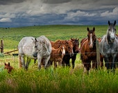 Western Horses in a Pasture in Wyoming under a Cloudy Sky No.12112 - A Fine Art Domestic Animal Photograph