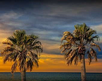 Two Palm Trees at Sunrise by Aransas Pass Harbor in Corpus Christi Bay by the Gulf of Mexico No.0535 A Fine Art Nautical Seascape Photograph