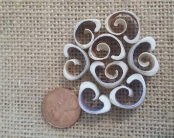 Vintage Cut Cowry Shells White Purple Spiral Sliced Sailors Valentines, Jewelry Making Mid Century Arts & Crafts, Lost Seashell Art Supplies