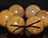 6 Pieces 14mm ***Excellent Quality~Petrified Fossil PALM WOOD Large Round Beads - B1022