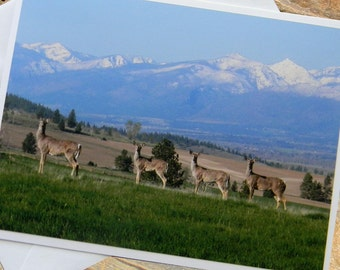 Deer and Mountains Photo Note Card. Wildlife Nature Photography Montana.