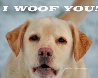 LABRADOR Greeting Card, Animal photography, Pet photography , Photo Greeting Card, Handmade, whimsical funny card