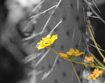 Bringing Sunshine Bright Yellow Daisy on Black & White Photograph Wall Art Simple Beauty Floral Print Lemon Yellow Sunshine Sunbeam