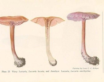 ANTIQUE MUSHROOM Double-Sided Book Plate Waxy Laccaria and American Lepiota New York State Museum Handbook 1935