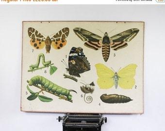 Vintage School Chart, Butterflies, Biology Chart