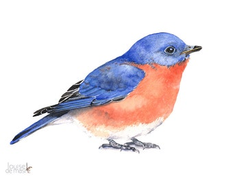 Bluebird Watercolor Painting - bird print of watercolor painting A3 size print wall art print - bird art print BB2013
