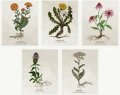 Organic Cotton Patches - Medicinal Plants - 5 Designs to Choose From!