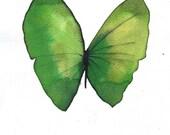 """grass green butterfly  8 X 10"""" original watercolour painting"""