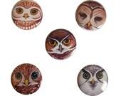 """Owl Birds of Prey 1"""" Pin Button Set"""