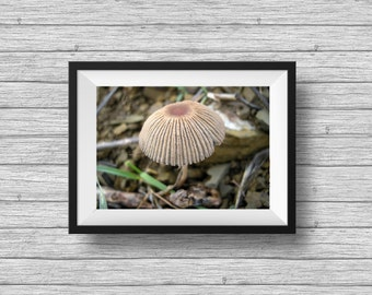 Mushroom photograph, woodland forest print, nature photography, home decor, wall art, Tiny
