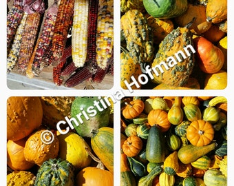 Autumn Collage - instant digital download image - gourds, Indian corn, and pumpkins at Atkins Farms Country Market in Amherst, MA