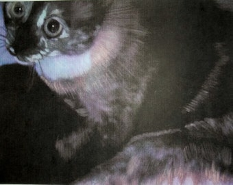 Siamese Cat - Odd Marked - 2 hand tinted photos of shelter cat - print