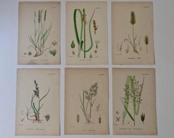 Antique BookPlate SET Colored Engraving of Meadow Grass, Original Botantical Moor Grass Bookplate SET , Chinoiserie green, Prairie Grass