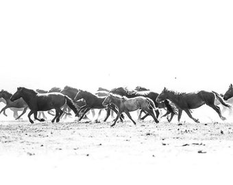 Black and white horse photo print three horses in the