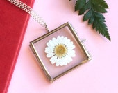 Real Daisy Necklace - Glass Pendant Locket Pressed Dried Flower