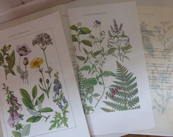 3 Antique Botanical Illustrations, Medicinal Plants , French Medical Circa 1920's
