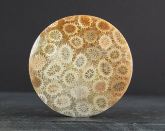 Excellent round fossil coral cabochon., Gemstone, natural cabochon, jewelry making supplies S6834