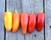 Hot Pepper Mariachi Pepper Seed Mild Large Chile Peppers Organic Peppers Great For Home Canning and Salsa