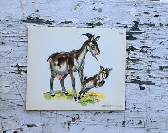Vintage goat print