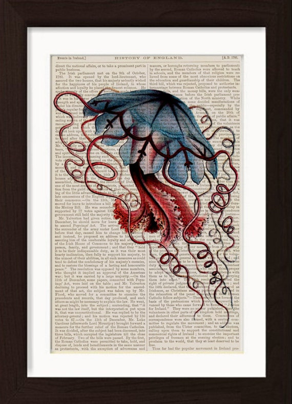 Jellyfish Blue Illustration 2  by Ernst Haeckel  mixed media  Print on  1870's encyclopaedia History of England Page