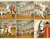 RESERVED FOR RW - Spanish Riding School - Vintage 1960s Multiview Vienna Spanische Hofreitschule Lipizzaners Postcard