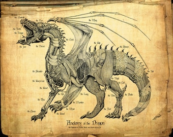 Anatomy of the Dragon Parchment