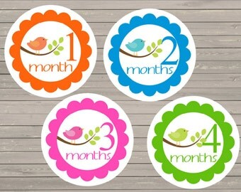 Baby Monthly Stickers Girl Stickers Month Stickers Milestone Stickers Baby Shower Gift