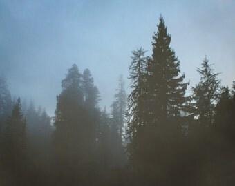 "redwood photography print / black blue large wall art / minimal nature woods forest California landscape photo print / ""blue redwood mist"""