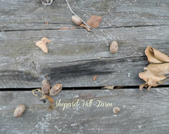 Abandoned Pecans Photograph DIGITAL Download Primitive Rustic Country Barn Wood Background Art Crafts COMMERCIAL LICENSE