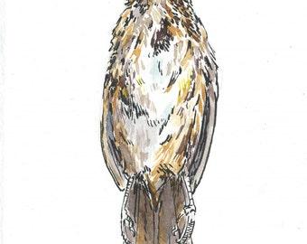 DeadBird003 - Print of my original illustration