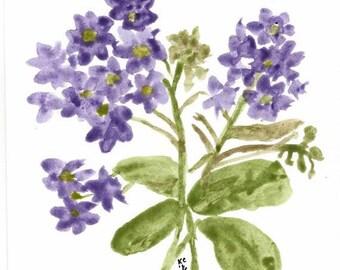 Original Watercolor Art - Purple Violets - Botanical Art