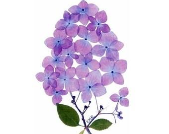 Hydrangea - Pressed flower notecards, set of 6 cards - #026