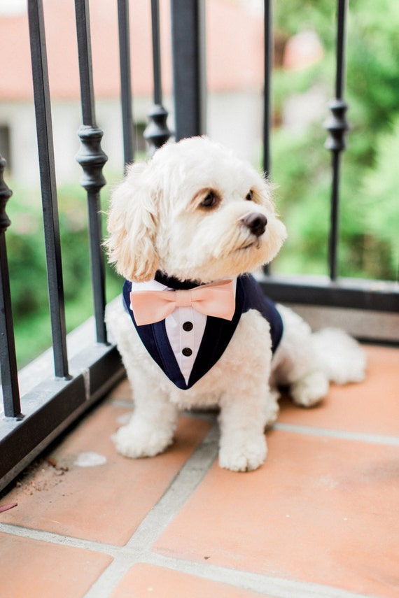 Blue formal dog tuxedo wedding tuxedo for dogs custom made for Wedding dress for dog