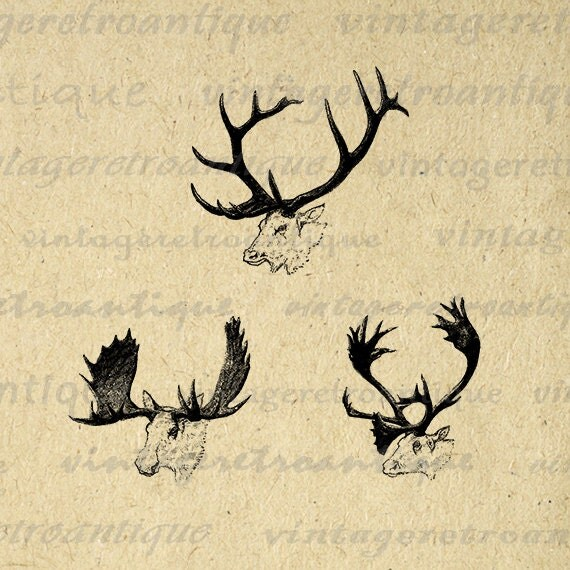elk antlers graphic - photo #5