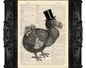 Dodo Bird Gentleman Funny Vintage Art Print - ORIGINAL ARTWORK - Dictionary Art Print Vintage Upcycled Antique Book Page 484