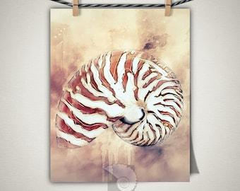 Nautilus shell wall art, shell art print, beach decor, sea shells, seaside treasures, beach combing, cool stuff, decor, gifts for her
