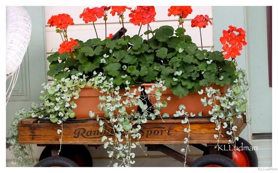 Geranium Wagon