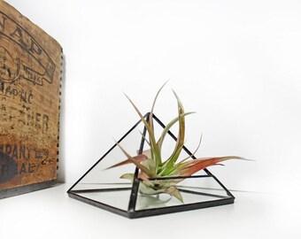Pyramid Terrarium / Small Geometric Air Plant Terranium / Air Plant Holder